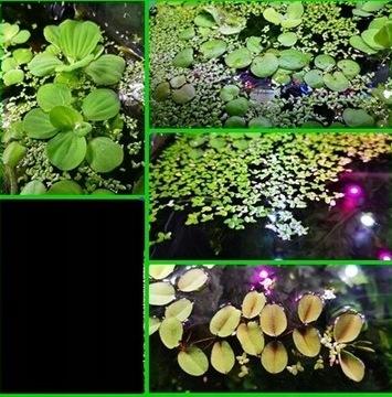 Набор № 1 плавающие растения в аквариум доставка товаров из Польши и Allegro на русском