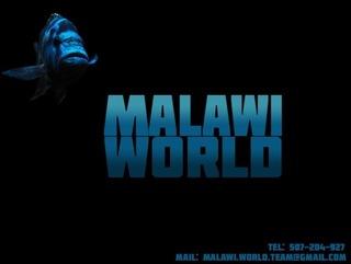 Malawi World Pyszczaki z Jeziora Malawi  доставка товаров из Польши и Allegro на русском