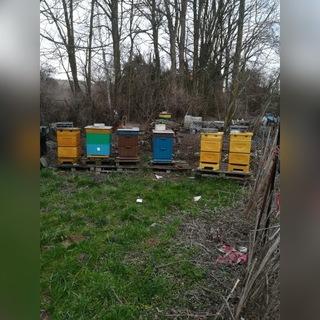 Семьи пчелиные доставка товаров из Польши и Allegro на русском