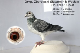Sieka Samica oryg. Zborowski W&S доставка товаров из Польши и Allegro на русском