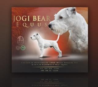 Parson Russell Terrier доставка товаров из Польши и Allegro на русском