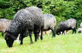 Sprzedam owce доставка товаров из Польши и Allegro на русском