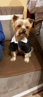 York Yorkshire Terrier reproduktor ZA DARMO. доставка товаров из Польши и Allegro на русском