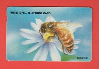 ЮЖНАЯ КОРЕЯ фауна насекомые пчелы доставка товаров из Польши и Allegro на русском