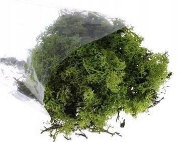 Chrobotek zelený mach prirodzený