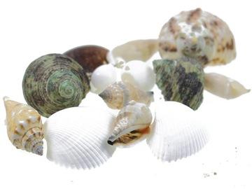 Morské mušle mix veľké 100g škrupiny