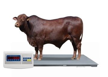 Hmotnosť inventára 1.2x2.2 3T 3000 kg do hovädzieho dobytka