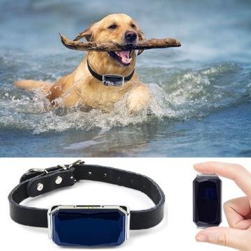 GPS LOCKTOR PRE DOG CAT Server golier