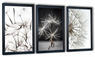 Sada 3 obrázkov v ráme s fotografiami púpav 99x43