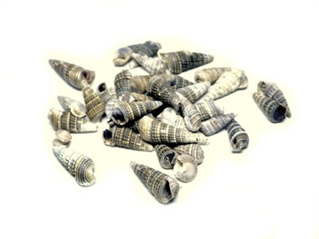Mušle Malé prírodné morské mušle K20 50g
