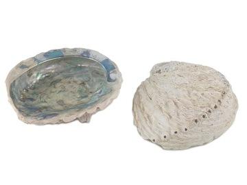 Krásne veľké shell more škrupiny Abalone 15 cm