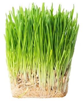 НАБОР CAT'S GRASS FAVOR