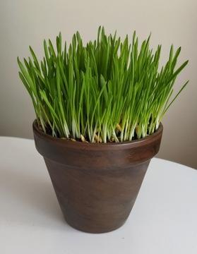 Yum Trawka - Трава для кошек 300g