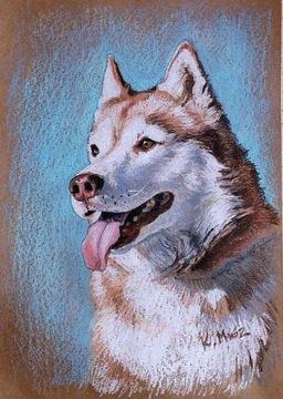 СИБИРСКИЙ ХАСКИ портрет собаки масляная пастель А3