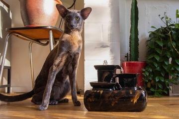 Керамический фонтан с кошкой - Галактика Миаусторе
