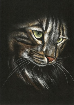 Котенок мейн-кун Рисунок кота для подарка - А4