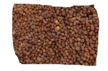Редис масляный 25 кг
