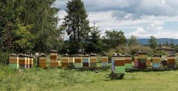 Прополис Kit Bee 100g из Бещадских гор урожай 2021 г.