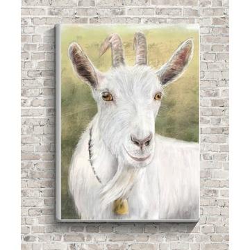 Obraz na płótnie KOZIOŁ koziołek koza 30x40cm
