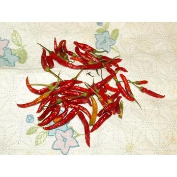 papryka chili pepperoncini picolo nasiona