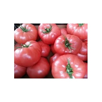 Rozsady pomidorów malinowy / Śliwka /krakus