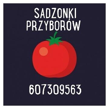 Sadzonki warzyw