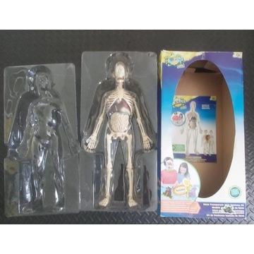 Anatomiczna figurka ciała i narządów człowieka