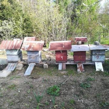 Ul wielkopolski drewniany 18 szt
