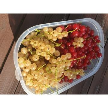 Owoce porzeczki prosto z ogrodu :)