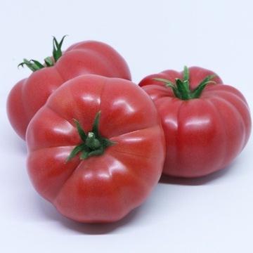 Sadzonki pomidorów Sonarosa F1 i inne
