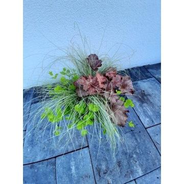 Mix 3l. donica żurawka , trawa ,tojeść na balkon