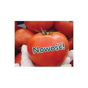 Pomidor Torero - 1 nasiono - Najlepszy do Maxifort