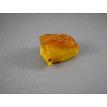 Bursztyn bałtycki surowy 14,5 g / 35x27x22mm