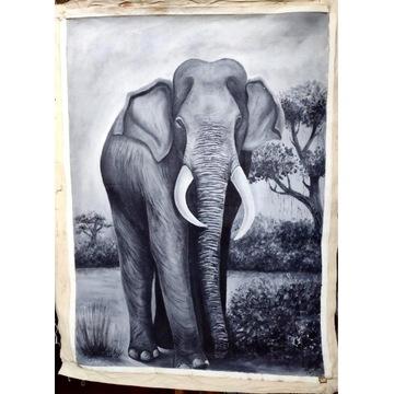 Obraz akrylowy SŁOŃ INDYJSKI 100x75