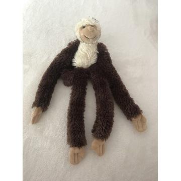 Miś małpka