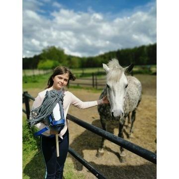 Koń Hobby Horse na kijku - Morwa