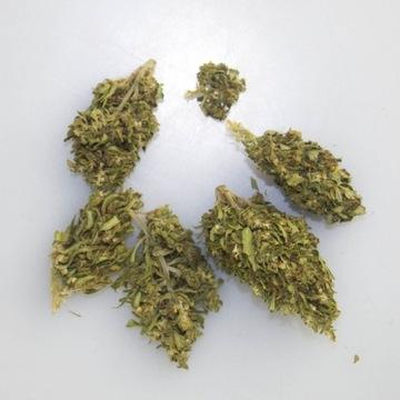 KC VIRTUS 5G - SUSZ CBD 6%