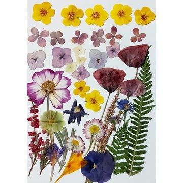 Suszone kwiaty do żywicy i pod witraże, 21x30 mix7