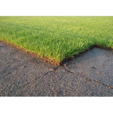 Trawa z rolki, trawa w rolkach, trawnik z rolki