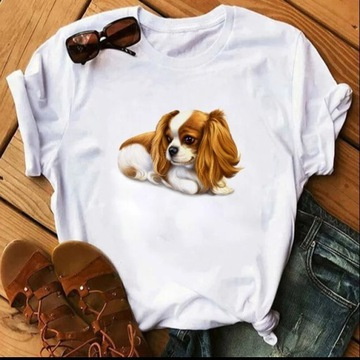 Koszulka t-shirt  cavalier king charles spaniel