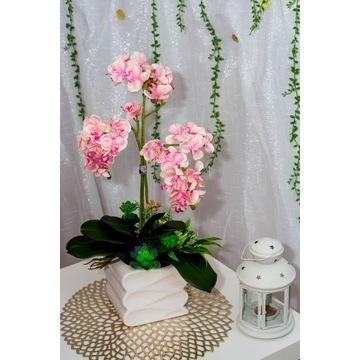 Przepiękne różowe storczyki