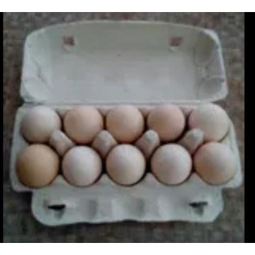 Sprzedam jajka wiejskie i od zielononóżki Wołomin