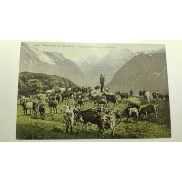 Stado kóz, pasterz, góry, Szwajcaria
