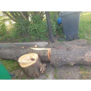 Drzewo na opał