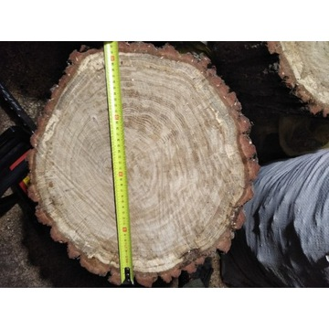 Plaster Dębowy 40cm / 10 cm