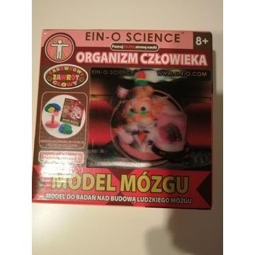 Model mózgu zabawka