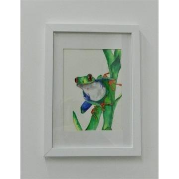 kevin maynard watercolour painting tree frog