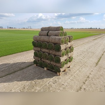Trawa z rolki trawnik w rolkach Poznań montaż