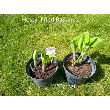 Hosta Fried Bananas 3l XXL