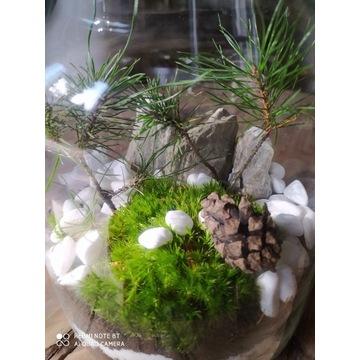 Las w Słoiku Dekoracja stołu recepcji WARSZTATY